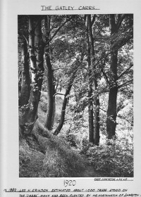 In 1882 Leo H. Grinden estimated about 1,000 thousand trees stood on the Carrs, many had been planted by Mr Worthington of Sharston.