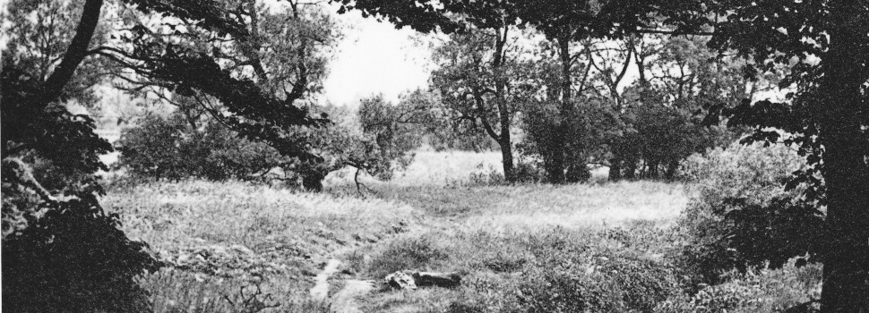 Image of Gatley Carrs in 1920