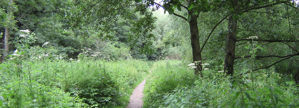 Photo of pathway by stream at Gatley Carrs